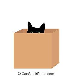 black macska, alatt, egy, doboz
