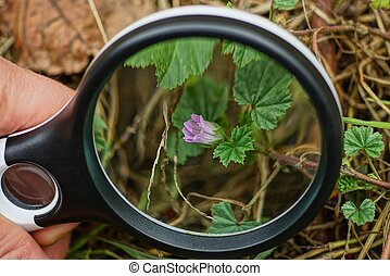 black magnifier in hand increases the bud of a red small flower