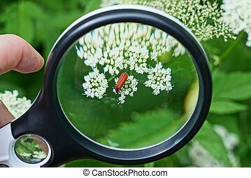 black magnifier in hand magnifies one red beetle on a white flower