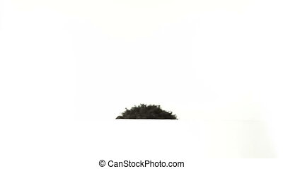 Black man isolated on white