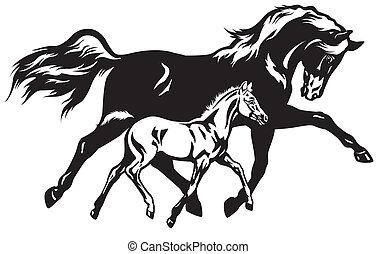 black , merrie, foal, witte