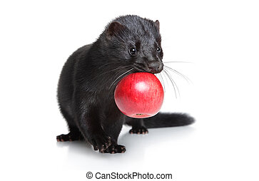 Black mink with red apple on white background