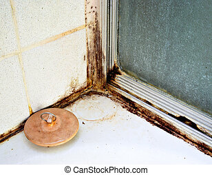 Black Mold - Black mold growing on shower tiles in bathroom