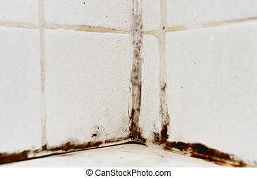 Black Mold - Black mold growing on shower tiles in bathroom