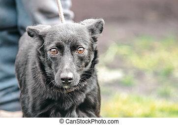 black mongrel dog on a leash