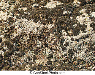 Black moss and lichen on a stone. Background. - Black moss ...