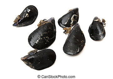 black mussels on a white background