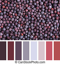 Black mustard seed palette