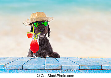 Black mutt dog posing with colorful cocktail.