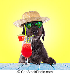 Black mutt dog posing with water melon cocktail.