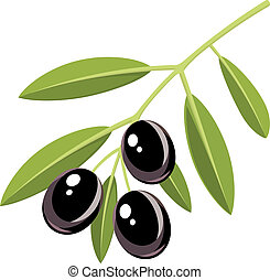 Branch of black olives with leaves