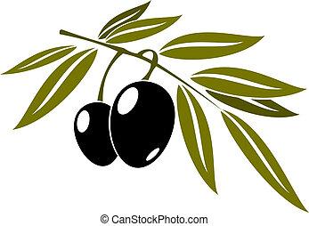 Black olives branch with leaf