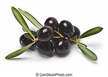 Black olives on the branch. - Olives with leaves isolated on...