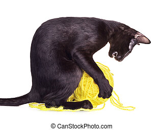 Black Oriental Shorthair Cat Playing With Woolen Ball