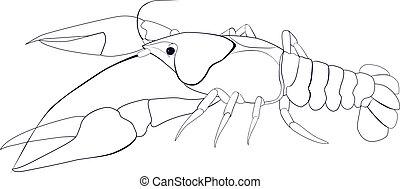 crayfish sketch