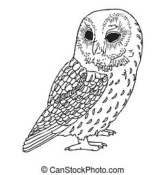 black owl - Original Hand drawing of Owl- vectorized