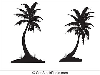 black palms - two coconut palms on white background