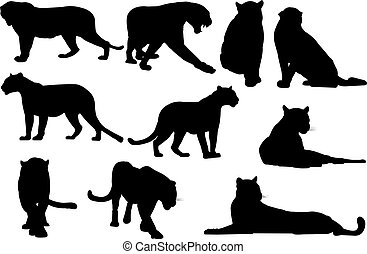 Black panther Silhouette vector illustration