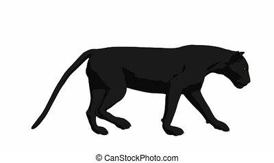 Black Panther Walking - Black panther walking on a white...