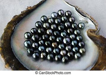 Black Pearl Cultivation - ROROTONGA - SEP 21:Black lip ...