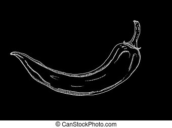 Picture of white chilli pepper on the black background