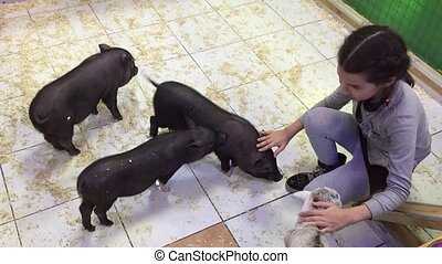 Black pig. Girl playing with black pigs in a contact animal...