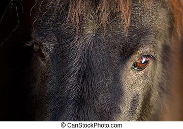 Black pony eyes