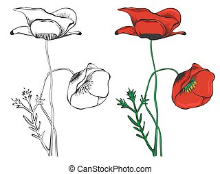 Black poppies and colorful isolated on white background