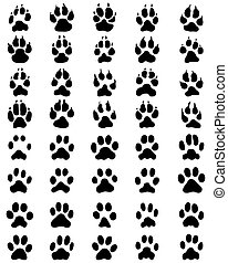print of paws of dogs and cats