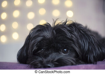 Black puppy on yellow bokeh background