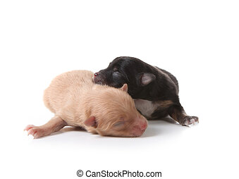 Puppy Sleeping Atop His Brown Brother