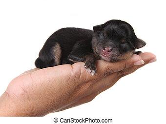 Black Puppy Sleeping in Hand