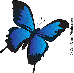 black, purple and blue butterfly flying