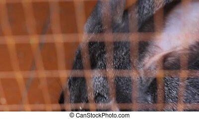 black rabbit eating carrot