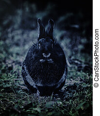 Black Rabbit photographed at nigh - Nice black rabbit...