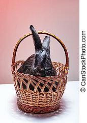 Black rabbit sitting in a basket