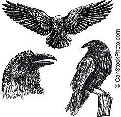 Black raven bird vector sketch icon set