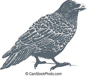 Black Raven Engraving Illustration