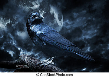 Black raven in moonlight perched on tree. Scary, creepy, ...