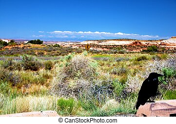 Black Raven in Utah Canyonlands Park. Utah Landscape ( ...