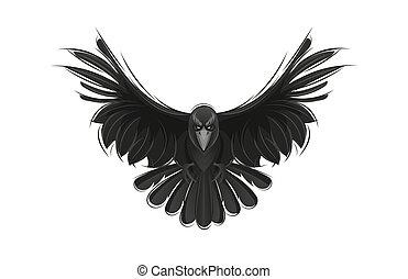Black raven isolated on white background.