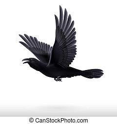 Black raven on white background - Flying black raven...
