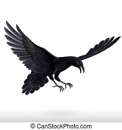 Black raven on white background - Illustration of aggressive...