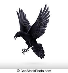 Black raven on white background - Aggressive black raven...