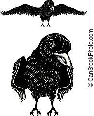 Black raven silhouette
