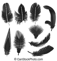 Black realistic vector feathers isolated on white.