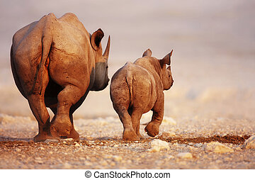 Black Rhinoceros baby and cow - Black Rhinoceros cow and...