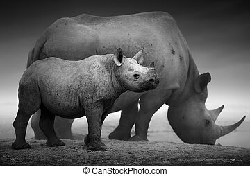 Black Rhinoceros calf (Diceros bicornis) standing with cow at a waterhole - Etosha National Park (Digitally enhanced)