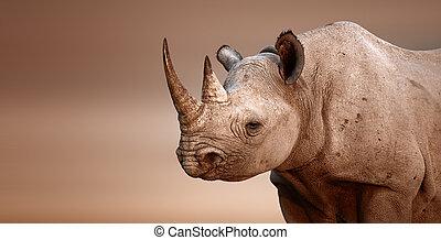 Black Rhinoceros portrait (Diceros bicornis) - Salt pans of Etosha National Park (Namibia)