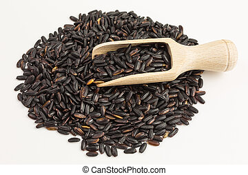 black rice - oryza sativa